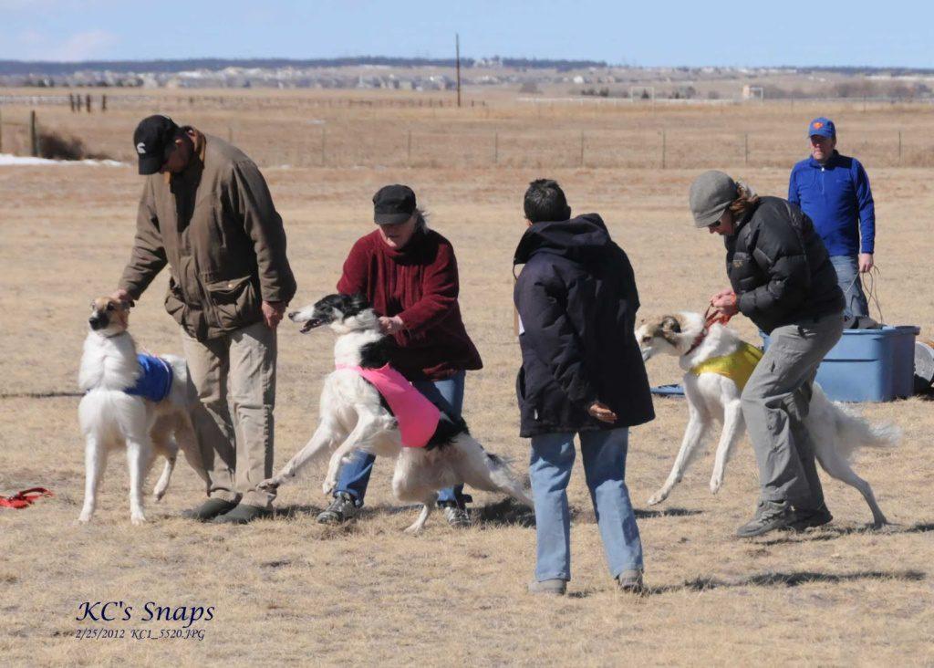 ASFA Lure Coursing Photos Feb 25 2012