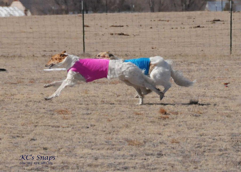 ASFA Lure Coursing Feb. 26, 2012